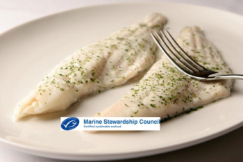 WILD HADDOCK FILLETS
