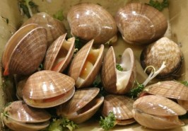 WHOLE CLAMS